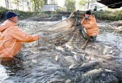 Правила ведения рыболовного хозяйства и рыболовства